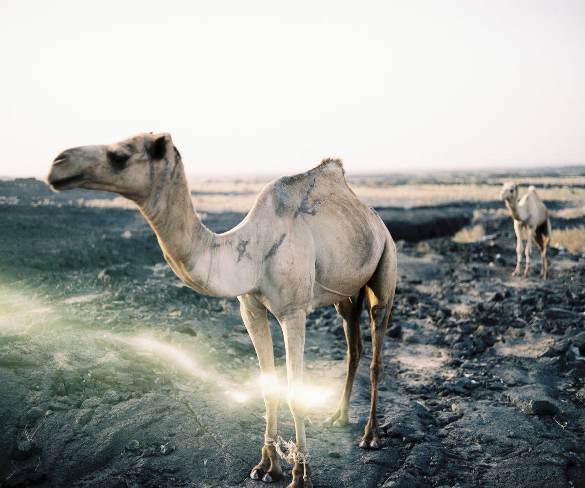 Strange light leak in the ethiopian desert // PM67